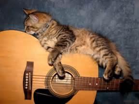 cat guitar guitar cat by busybee13 on deviantart