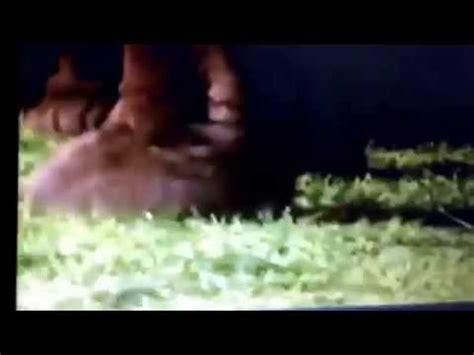2011 lyons partnership / hit entertainment. Barney elephant song - YouTube