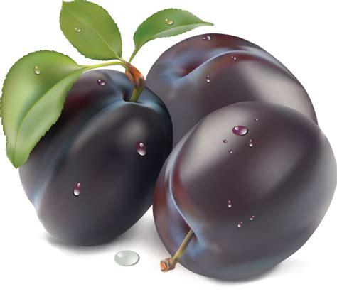 plum and purple image gallery purple plum