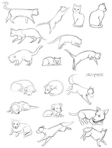 pin  kim casey  learning  draw animal drawings