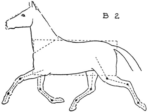 draw horses  easy step  step drawing lessons
