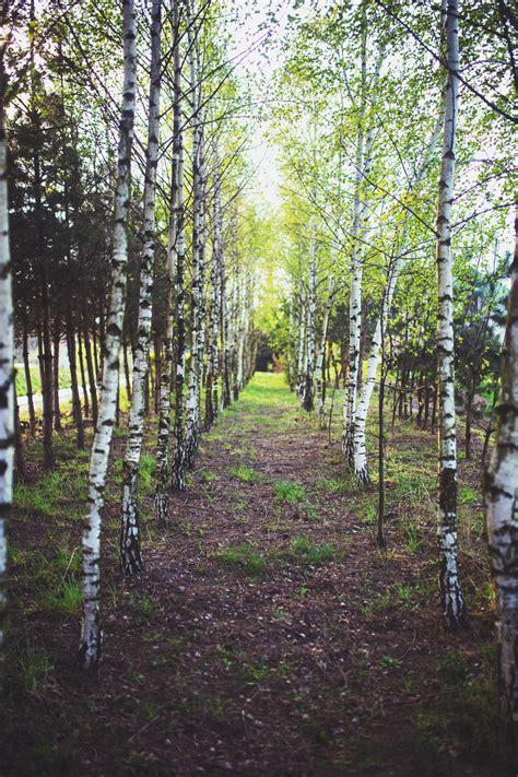 path   trees  stock photo