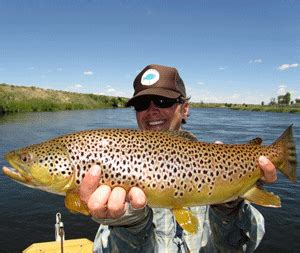 Boat Driving Age Utah by Barrus Green River Fly Fishing Guide Spinner