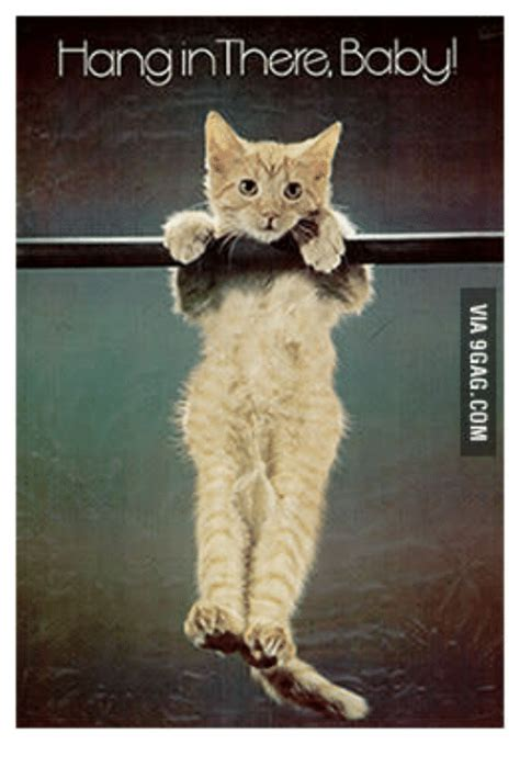 Hang In There Cat Meme - hang inthere babyl poster of cat hang in there meme on me me