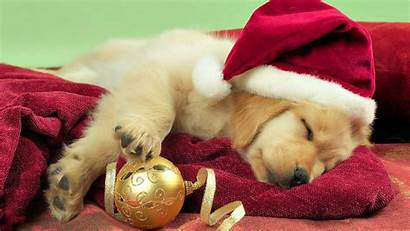 Puppy Christmas Wallpapers Puppies