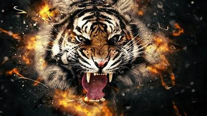 Tiger Face Wallpapers Animals 3d Desktop Background