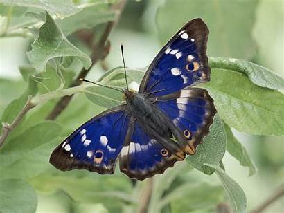 Butterfly Wallpapers Nature