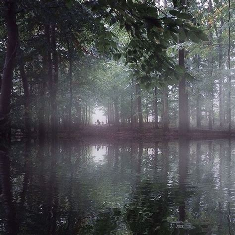 foggy travel nature dark nature dark image