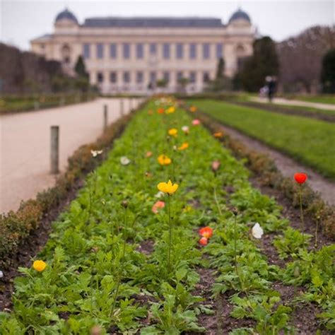 Menagerie Jardin Des Plantes Tarif by говорящие башмаки Picture Of Menagerie Du Jardin Des