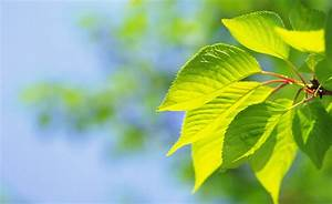 Photography, Leaves, Macro, Plants, Nature, Green, Wallpapers, Hd, Desktop, And, Mobile, Backgrounds