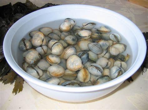 astuce pour bien nettoyer des coquillages trucs d 233 coration et astuces pour la cuisine