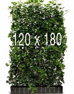 Eckbank 120 X 180 : hedera schutting kant en klaar bestel n voor 114 95 ~ Bigdaddyawards.com Haus und Dekorationen