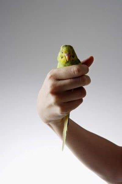 parakeets feathers sickness pets