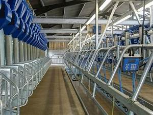 Dfsi 20 Point Herringbone Milking Parlor  Rs 2000000   Piece  Sumangalam Dairy Farm Solutions