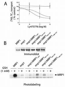 Effect Of Ly475776 On Ltc 4 Transport By Mrp1 And Murine