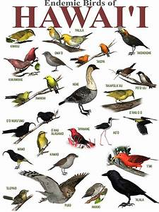 """""""The Endemic Birds of Hawaii"""" Stickers by Ken Gilliland"""