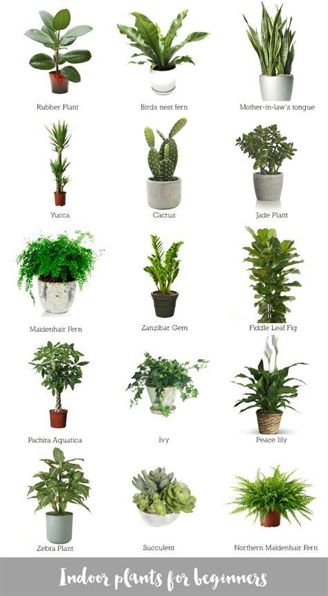 indoor tree plants indoor plants for beginners