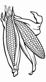 Corn sketch template