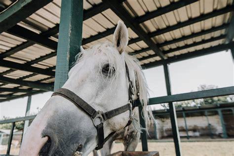 muskelaufbau beim pferd tipps fuer mehr muskeln
