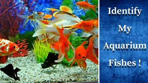 aquarium fish pictures  names  bestpictureorg