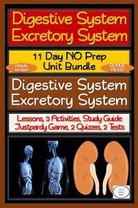 Digestive  U0026 Excretory System 11 Day No Prep Bundle  Lesson