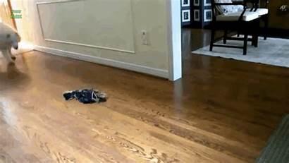 Sliding Dogs Floor Into Cruise Treadmill Tom
