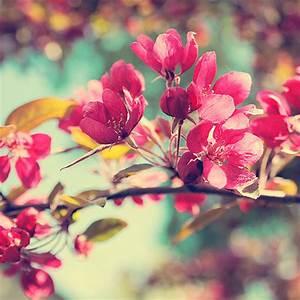 amazing, beautiful, cute, flower - image #620948 on Favim.com