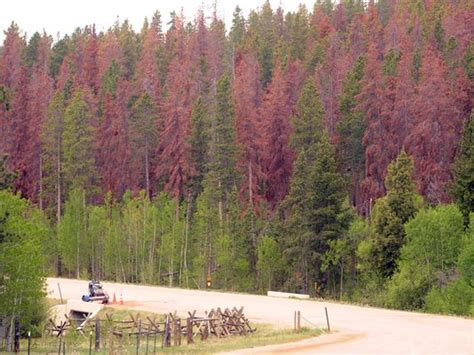 colorado wins second grant to help promote wood energy