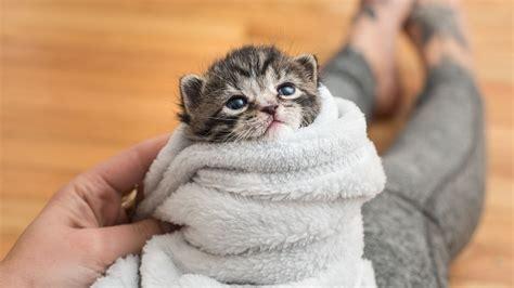 5 Ways To Comfort A Kitten