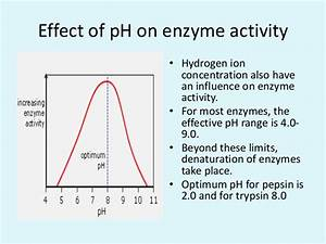 Effect Of Ph And Temperature On Enzyme Activity  Enzyme