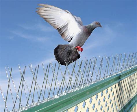 Window Sill Spikes by 10 Strips Vogelwering Pinnen Ideaal Tegen Vogels Maar