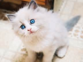 cutest cats in the world top 10 cutest pet cats in the world 2014