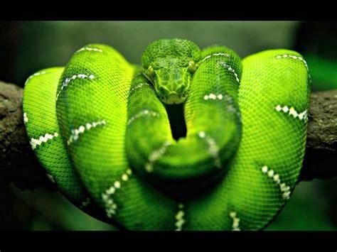title mit bildern gruene schlange schoene schlangen