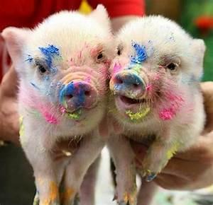 Lustige Tiere Bunt Beschmierte Schweinchen