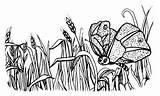 Wheat Coloring Pages sketch template