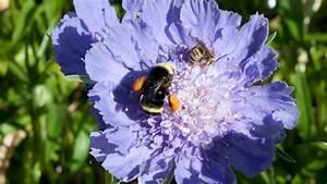 Flower Diagrams For Pollen Duster