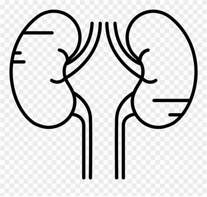 Outline Kidneys Clipart Pinclipart