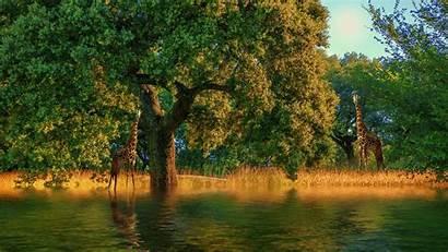 4k Ultra Desktop Animals Swamp Nature Animal