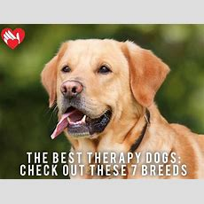 The Best Therapy Dogs? Check Out These 7 Breeds