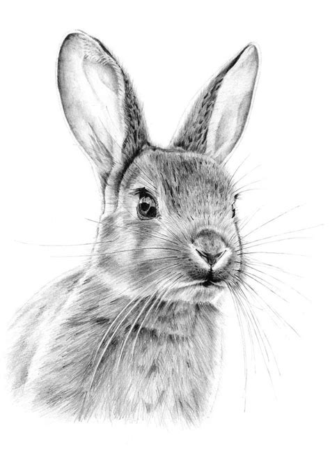 graphite drawings ideas  pinterest realistic