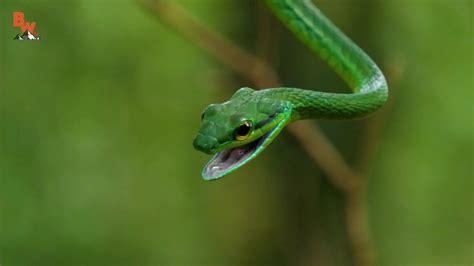 Coyote Peterson - Venomous Parrot Snake Caught! | Facebook