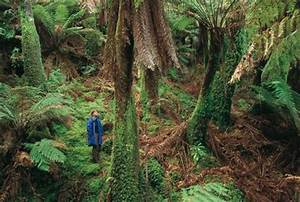 10 Facts About Australian Rainforests