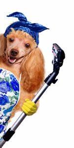Hundehaare Vom Sofa Entfernen : welcher handstaubsauger eignet sich gut f r tierhaarentfernung handstaubsauger profi ~ Bigdaddyawards.com Haus und Dekorationen