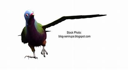 Burung Gambar Merak Resolution Gokil Kreasisenifoto Sumber