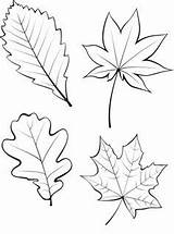 Leaf Coloring String Template Maple Patterns Printable Drawing Leaves Pot sketch template