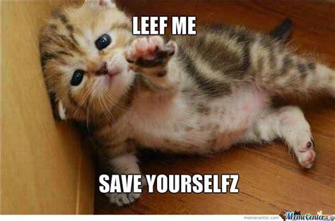 sad kitten memes image memes  relatablycom