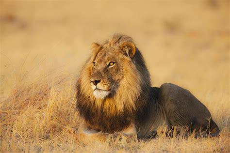 African Safari Animals Africa