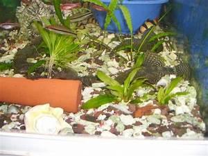Aquarium Zubehör Günstig : aquarium fische zubeh r in otterberg kaufen bei deine ~ Frokenaadalensverden.com Haus und Dekorationen
