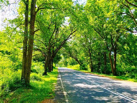 Sri Lanka, Nature, Road, Trees, Photography, Green