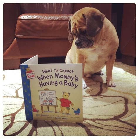 50 Adorable Dogs Who Shared Their Family's Pregnancy News ...